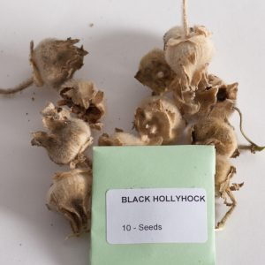 Black hollyhock seeds-0