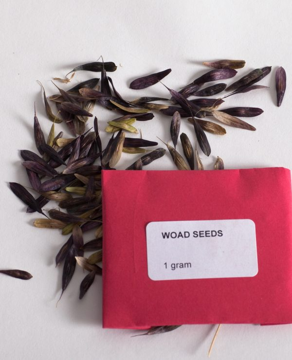 Woad seeds, 1 gram minimum per pack-0